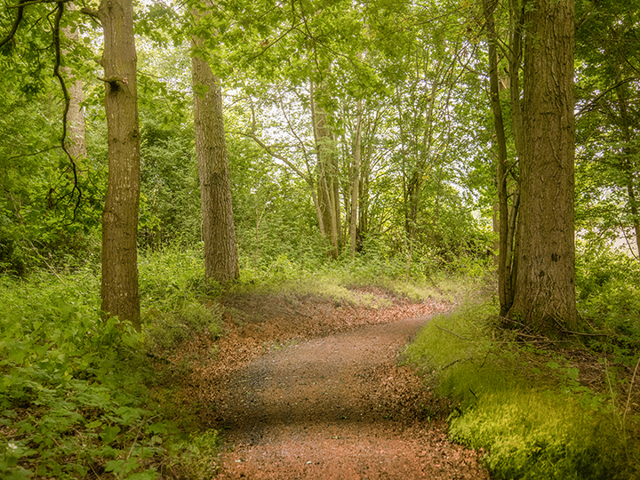 Woodland walk at Arrow Bank
